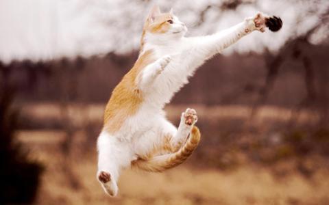 在跳跃的猫