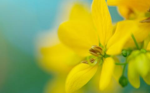 在被弄脏的背景的黄色花