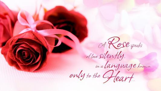 红玫瑰和关于爱的美丽的话