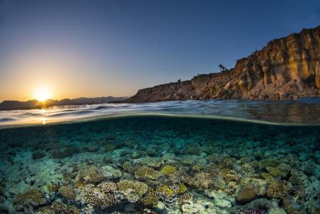 清澈的海水中的珊瑚在阳光下在黎明