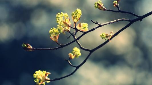 鲜花的春天诞生