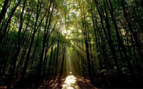 阳光照射的路在森林里