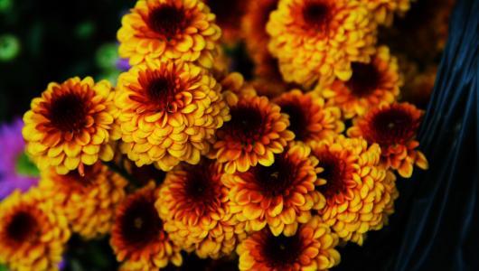 明亮的橙色菊花花束