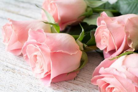 美丽的粉红玫瑰特写的花束