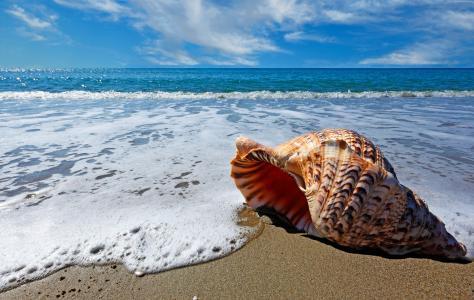 一个美丽的大贝壳躺在海边的沙滩上