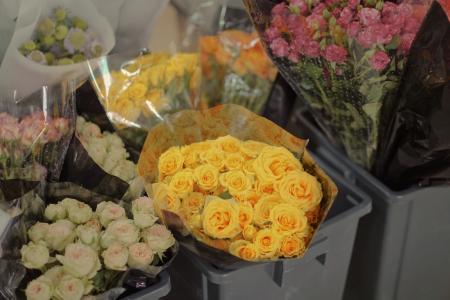 浪漫艳丽的玫瑰