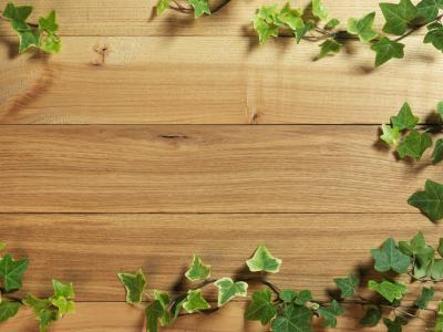 常春藤在木地板上