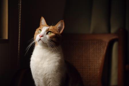 在扶手椅上的猫