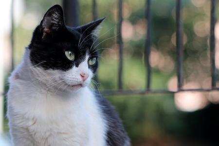 美丽的绿眼睛的黑白猫的严肃的看法