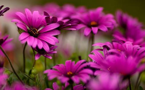 鲜艳的花朵