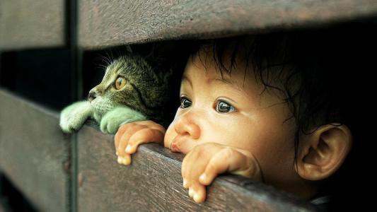 一个好奇的猫和宝宝