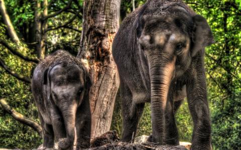 大象和大象