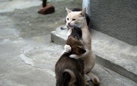 一只猫拥抱一只狗
