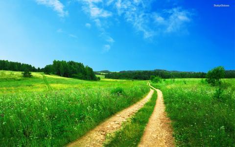 在夏季草地之间的路
