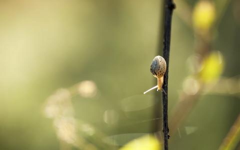 一只小蜗牛爬过一个黑色的树枝