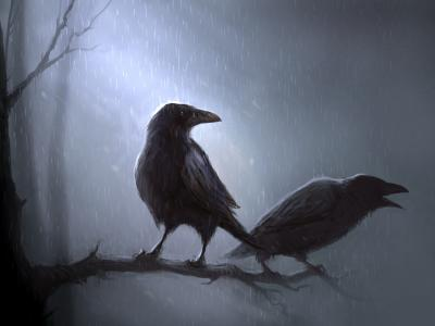 乌鸦在雨中