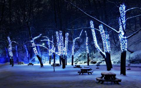 在冬季公园的圣诞树
