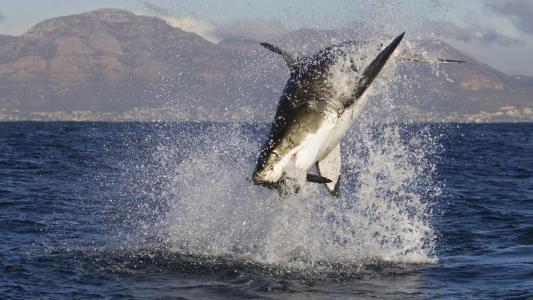 鲨鱼在水的喷雾