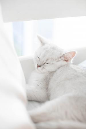 可爱猫咪微信背景