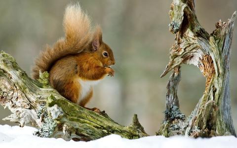 松鼠在树枝上