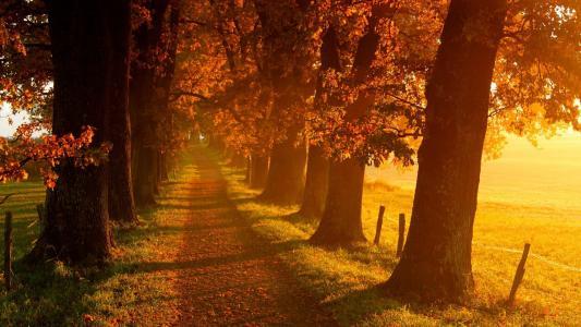 通往秋天的路