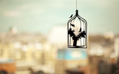笼子里的鸟在一个模糊的背景上的轮廓