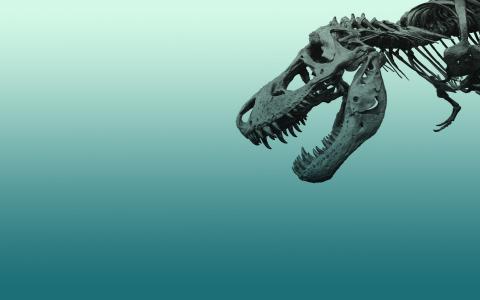 恐龙的头骨