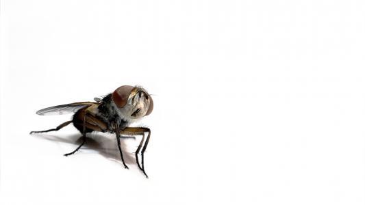 在白色背景上的昆虫