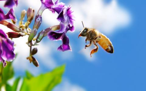 蜜蜂在花上