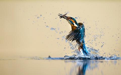 翠鸟抓到一条鱼