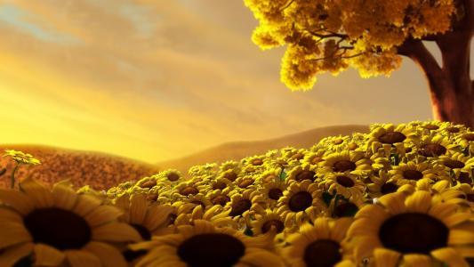 向日葵的世界
