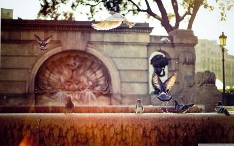 喷雾,喷泉,鸽子