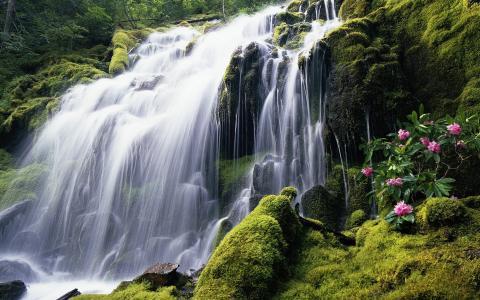 美丽的森林瀑布