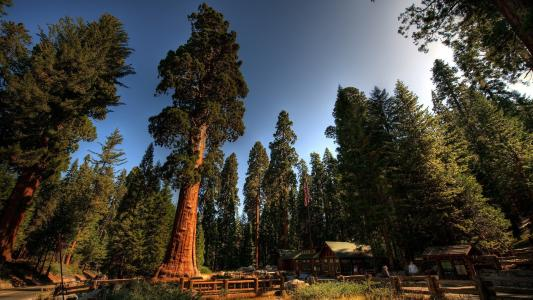 在伟大的美国红杉之下的forester的议院
