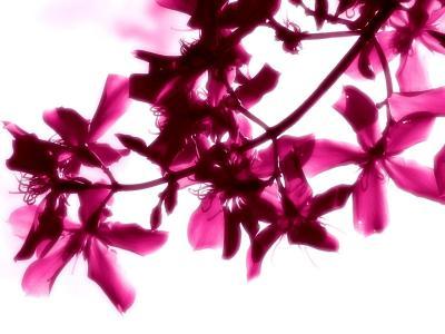 美丽鲜艳的花朵