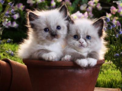 两只小猫在花盆里