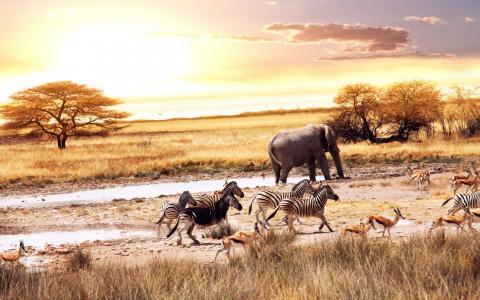 非洲大草原的动物