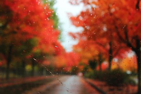 从车里的秋天景色