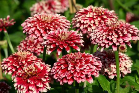 Cynia特写镜头庭院花