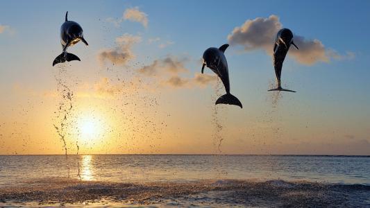 海湾的海豚