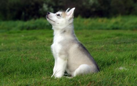 小狗坐在绿色的草地上