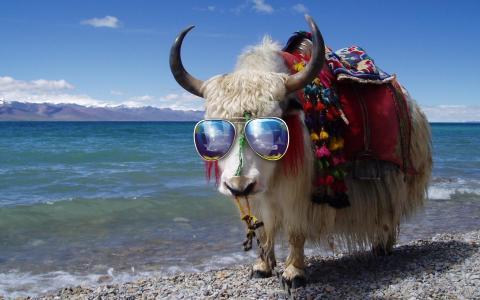 公牛太阳镜