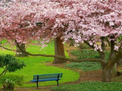 在树上的粉红色花朵