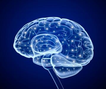 来自大脑的电信号