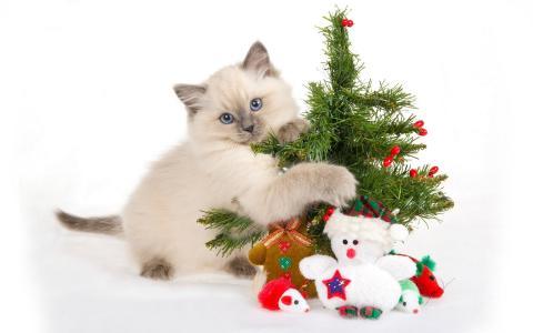 一只小猫玩圣诞树
