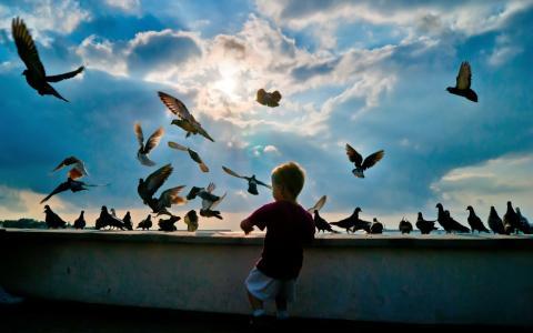 婴儿和鸽子