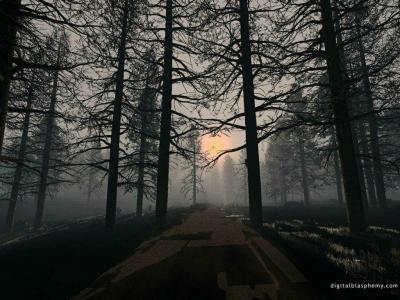 桌面壁纸在森林里