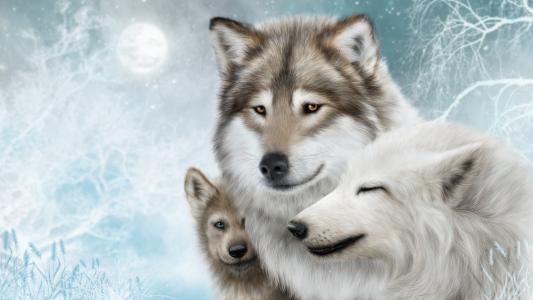 三头狼在冬天的家庭,绘图