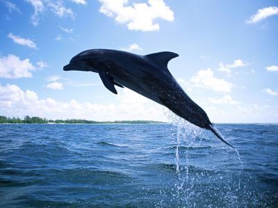浮动的海豚