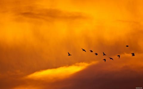 多云的春天天气的背景上的鸟